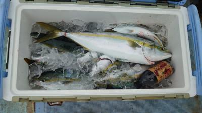 釣り船 秀進丸の2021年9月14日(火)3枚目の写真