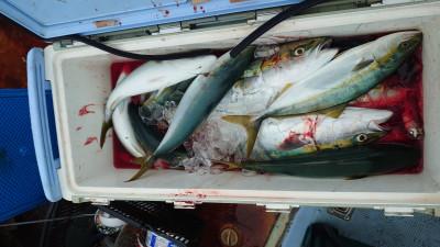 釣り船 秀進丸の2021年9月14日(火)4枚目の写真