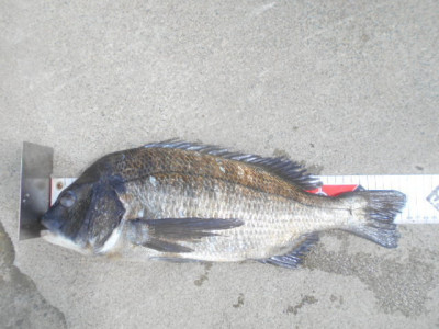 野村渡船の2021年9月11日(土)1枚目の写真