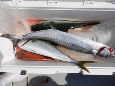 西岡遊漁の2021年9月4日(土)5枚目の写真