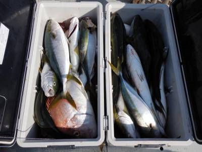 西岡遊漁の2021年9月9日(木)5枚目の写真