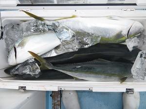 竹三丸の2021年9月11日(土)1枚目の写真