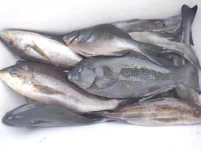 丸銀釣りセンターの2021年9月11日(土)3枚目の写真