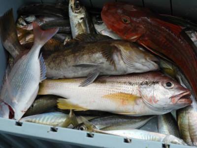 釣具の海友の2021年9月5日(日)4枚目の写真