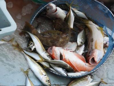 釣具の海友の2021年9月5日(日)5枚目の写真