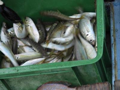 釣具の海友の2021年9月7日(火)3枚目の写真