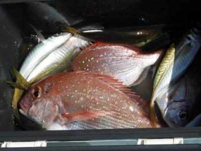 釣具の海友の2021年9月9日(木)2枚目の写真