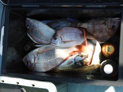 釣具の海友の2021年9月9日(木)3枚目の写真