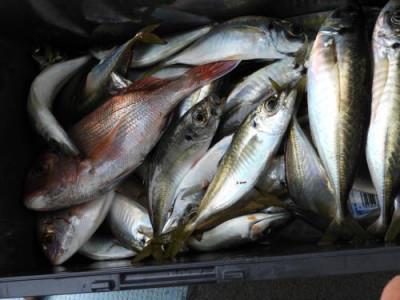 釣具の海友の2021年9月11日(土)5枚目の写真