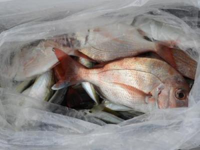 釣具の海友の2021年9月12日(日)4枚目の写真