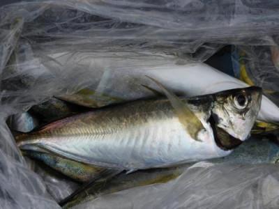 釣具の海友の2021年9月13日(月)3枚目の写真