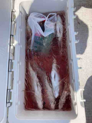龍宮丸の2021年9月15日(水)5枚目の写真