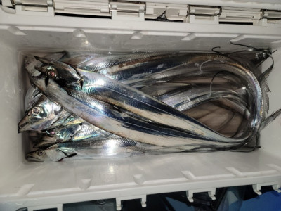 海晴丸の2021年9月12日(日)3枚目の写真