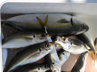 釣具の海友の2021年9月20日(月)4枚目の写真