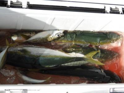 釣具の海友の2021年9月20日(月)5枚目の写真