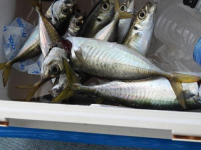釣具の海友の2021年9月21日(火)3枚目の写真