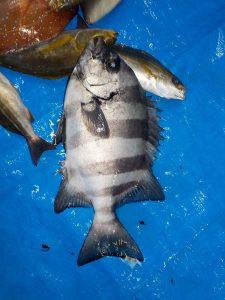美浜釣舟センターの2021年9月20日(月)1枚目の写真