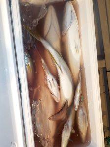 美浜釣舟センターの2021年9月20日(月)5枚目の写真
