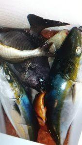 美浜釣舟センターの2021年9月21日(火)2枚目の写真