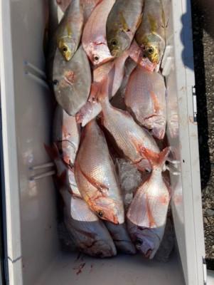 釣り船 黒潮丸の2021年9月23日(木)3枚目の写真