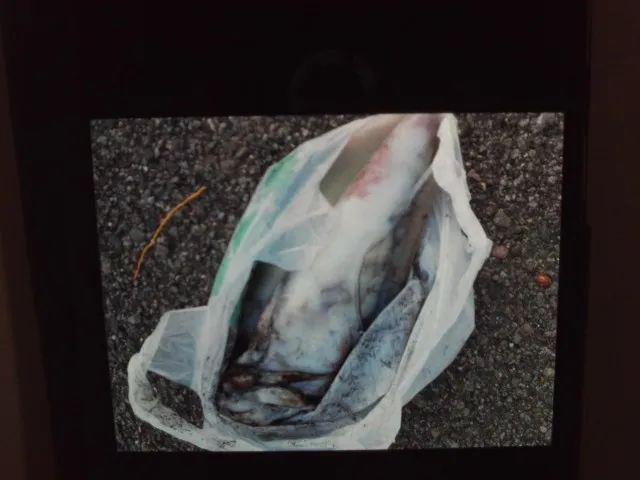 こかわ渡船 雅丸の2021年9月20日(月)2枚目の写真