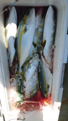 釣り船 秀進丸の2021年9月24日(金)5枚目の写真