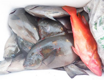 丸銀釣りセンターの2021年9月23日(木)5枚目の写真