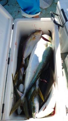 釣り船 秀進丸の2021年9月27日(月)4枚目の写真