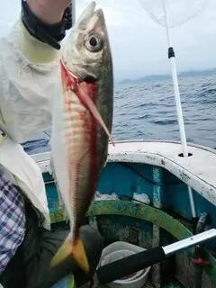 松福丸の2021年9月25日(土)4枚目の写真
