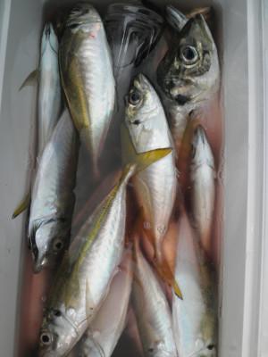 美咲丸の2021年9月29日(水)4枚目の写真