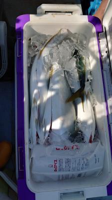 釣り船 秀進丸の2021年10月3日(日)3枚目の写真