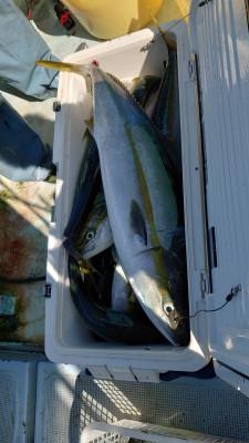 釣り船 秀進丸の2021年10月4日(月)2枚目の写真