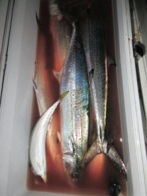 鈴木釣具店の2021年10月3日(日)5枚目の写真