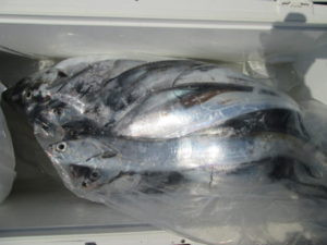絢美丸の2021年10月7日(木)5枚目の写真