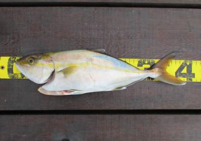 岩崎レンタルボート(岩崎つり具店)の2021年10月17日(日)5枚目の写真