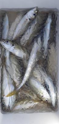 金寅丸の2021年10月20日(水)1枚目の写真