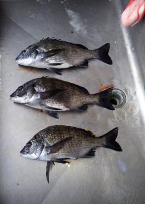 尾張屋の2018年5月16日(水)3枚目の写真