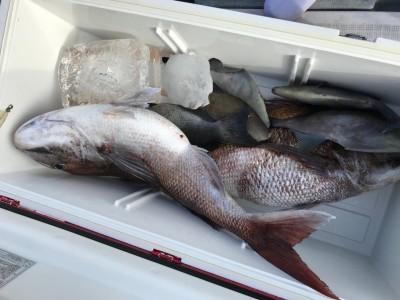 アラタニ釣具店の2018年7月1日(日)2枚目の写真
