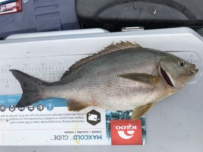 アラタニ釣具店の2018年7月12日(木)2枚目の写真