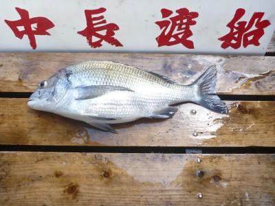 中長渡船の2018年7月20日(金)2枚目の写真