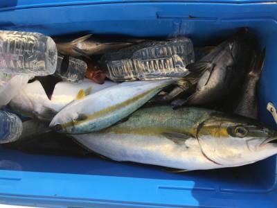 アラタニ釣具店の2018年7月20日(金)3枚目の写真