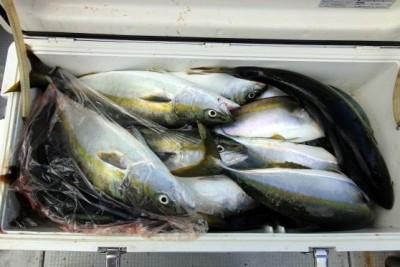 西岡遊漁の2018年7月31日(火)5枚目の写真