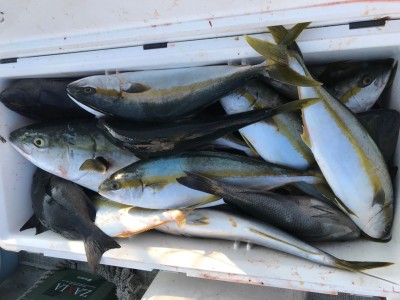 アラタニ釣具店の2018年8月5日(日)3枚目の写真