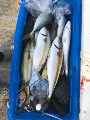 アラタニ釣具店の2018年8月11日(土)2枚目の写真