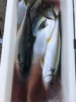 アラタニ釣具店の2018年8月12日(日)3枚目の写真