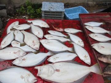 奥村釣船の2018年8月18日(土)5枚目の写真
