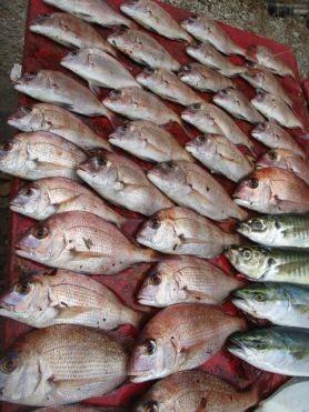 奥村釣船の2018年8月19日(日)4枚目の写真