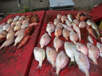 奥村釣船の2018年8月20日(月)4枚目の写真