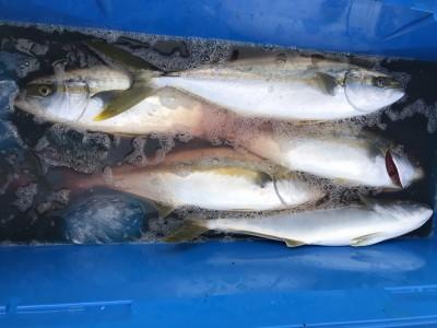 アラタニ釣具店の2018年8月25日(土)2枚目の写真
