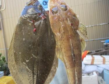 奥村釣船の2018年8月25日(土)1枚目の写真